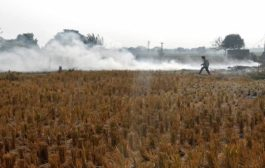 Air Pollution: Centre approves Rs 100 crore projects to tackle stubble burning