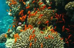 Coral ecosystems in India