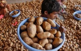 PepsiCo sues Indian farmers over the FC5 potato row
