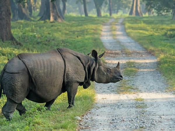DNA Database for Indian Rhinos