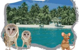 Barn Owl Campaign in Lakshadweep