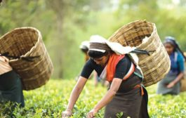TWO SMALL TEA GROWERS FROM ASSAM AWARDED BY ASPEE AGRICULTURAL RESEARCH AND DEVELOPMENT FOUNDATION