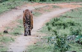 Joint Effort to Conserve Wildlife at Bandipur