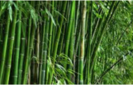 First Bamboo Industrial Park in Assam