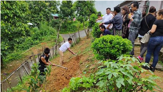 Schools turn nutrition gardens in Mizoram district
