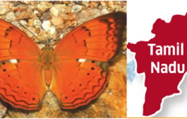 Tamil Nadu Declares Tamil Yeoman As The State Butterfly