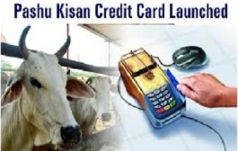 Haryana government has distributed the first Pashu Kisan credit cards