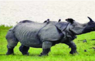 Rhinos to be re-introduced in Uttarakhand