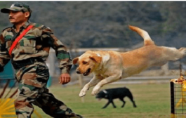 India's First War Memorial for Animals to Come up in Meerut