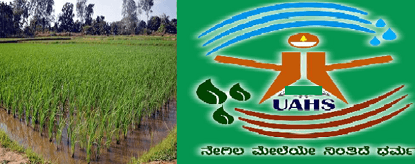 UAHS develops new paddy variety resistant to blast disease