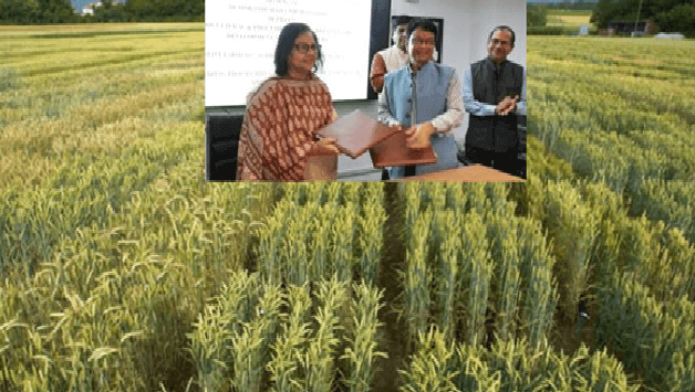 APEDA signs MoU with SFAC to boost food clusters