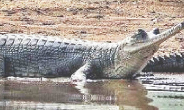 """National Chambal Sanctuary is declared as """"Eco-sensitive zone"""""""