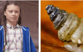 Scientists Discover New Snail Species, Name it After Teen Climate Activist Greta Thunberg