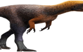 Researchers dig up new species of duck-billed dinosaurs in texas