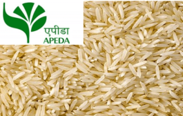 Centre sets up new body to promote rice exports