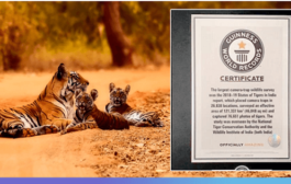 India's 2018 Tiger Census sets a new Guinness World Record