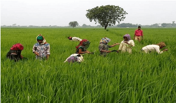 Cabinet approves Central Sector Scheme of financing facility under 'Agriculture Infrastructure Fund'