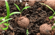 IIT Kanpur develops indigenous seed balls titled 'BEEG'