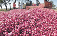 Government bans export of all kind of onions with immediate effect