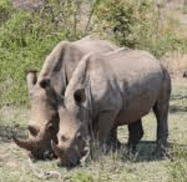 """""""Kaziranga park"""" is to be expanded by 3,053 hectares"""