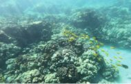 Report on the decline of American coral reefs