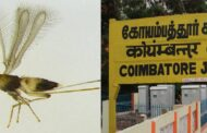 A new species of fruit fly which was discovered from Coimbatore district
