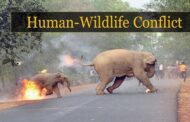 National Board of Wildlife recently approved advisory for Human-Wildlife Conflict Management