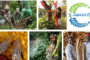 Two Indian organisations win UNDP Equator Prize 2021