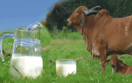 Government sets up Dairy Investment Accelerator