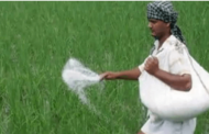 Union Government announced a net subsidy of 28,655 crore rupees on Phosphatic and Potash (P&K) fertilizers